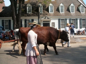 A team of oxen roam the street during P. Henry's speech